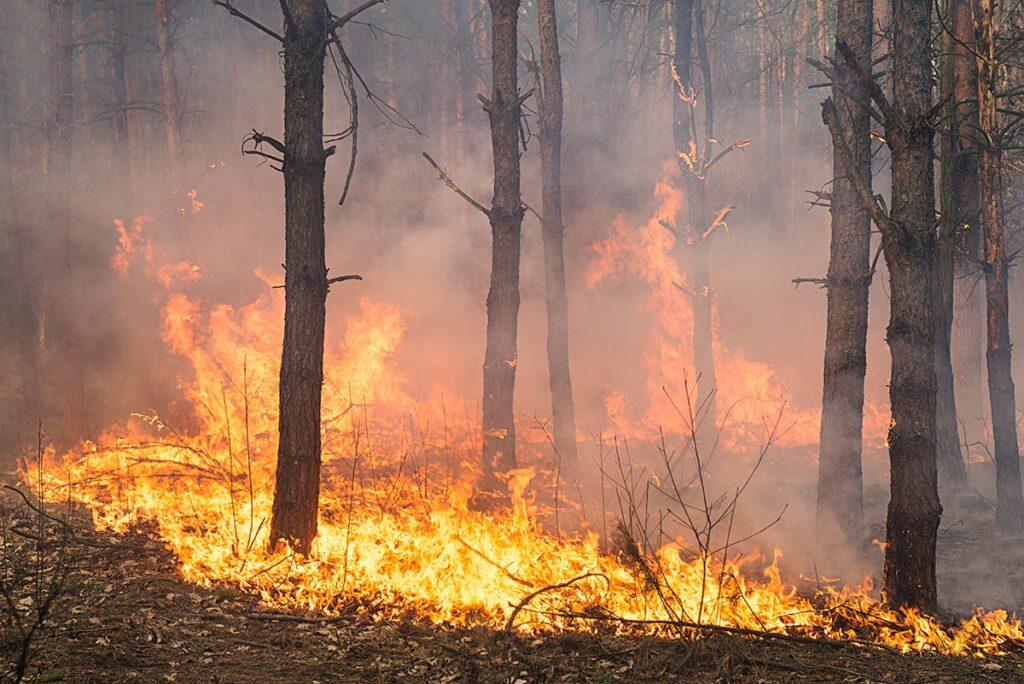 Wypalanie traw – czy rzeczywiście stanowi zagrożenie?